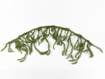Licopodium girlanda viseča