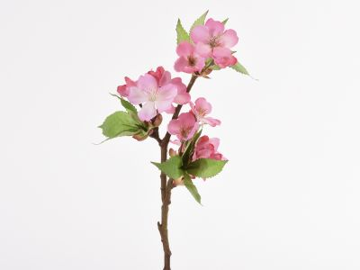 Češnjeva vejica pik 35cm