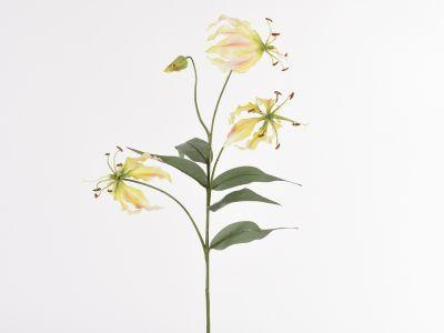 Gloriosa vejica x3 81cm