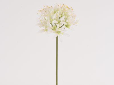 Agapanthus vejica 67cm