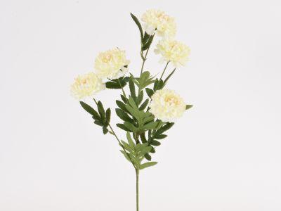 Krizantema vejica x5 cvetov
