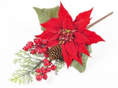 Božična zvezda z jagodičevjem