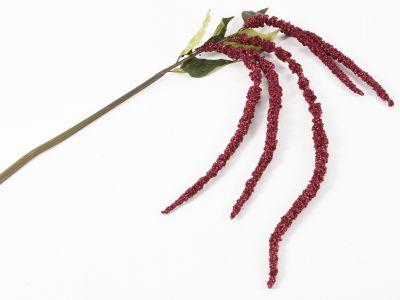 Amarantus veja x5