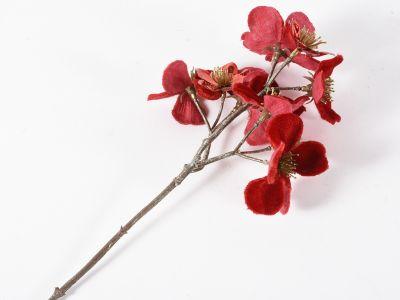 Cvetovi češnje pik