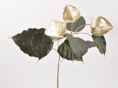 Phisalis vejica 50cm