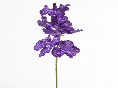 Orhideja vanda vejica 73cm