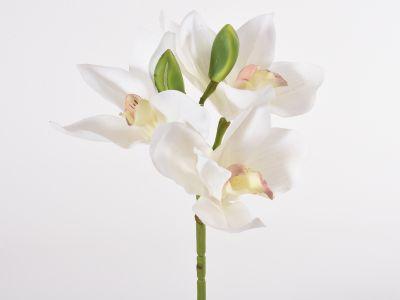 Orhideja cymbidium pik 27cm