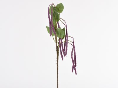 Fižolova vejica 86cm