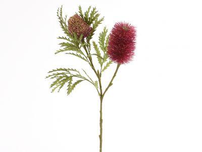 Banksija veja x2, 76cm