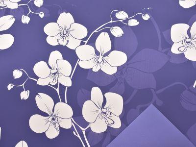 Rola Phalaenopsis