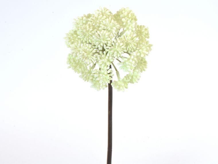 Aglaia odorata veja 53cm